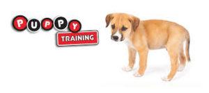Dog K9 (Canine) Puppy Training – Socialization 01