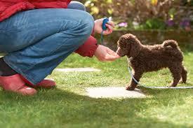 Dog K9 (Canine) Puppy Training – Socialization 02