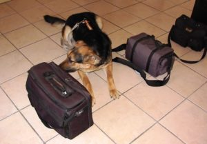 narcotic-drug-detection-dog-k9-canine-bruno