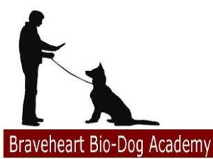 Obedience dog-K9 Canine Training