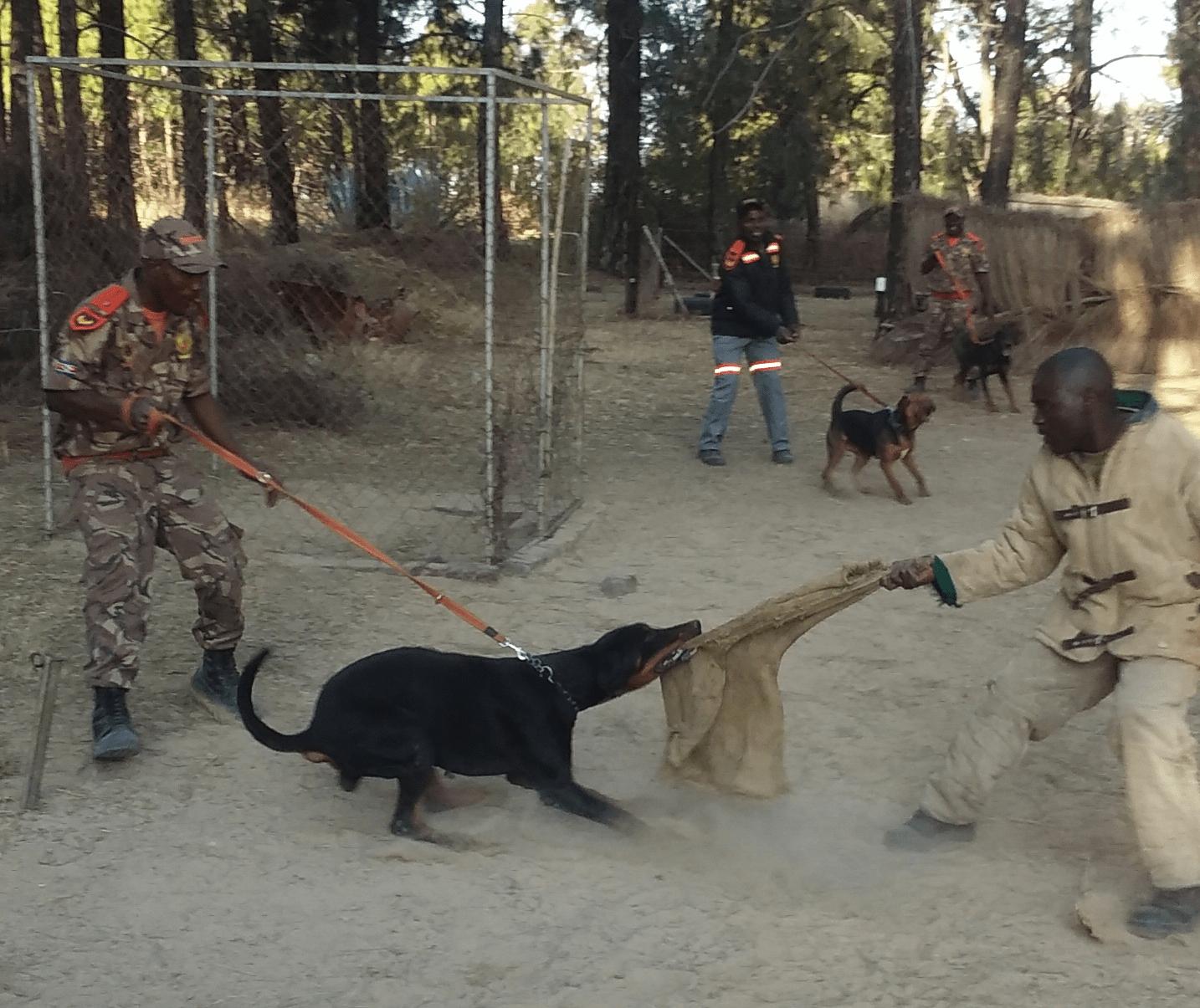 Rent-a-Dog_Handler and Dog04