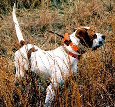 Tracker Dog - Anti-Poaching Dog K9 (Canine) - Penny