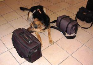 narcotic-drug-detection-dog-k9-canine-bruno