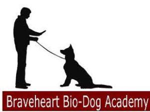 Obedience dog-K9 Canine Training