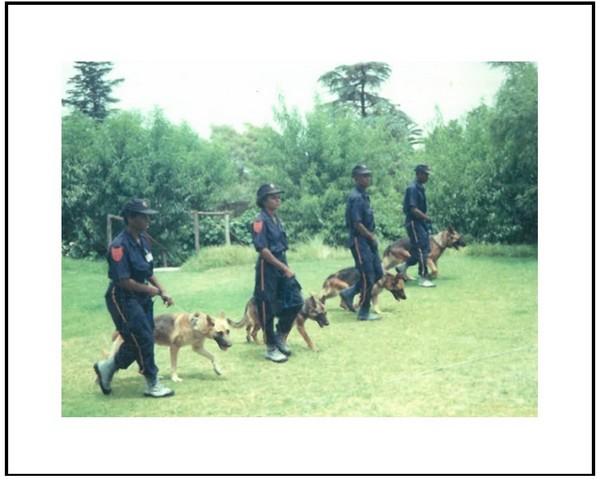 Post 02 - K9 Dog Handler Teams