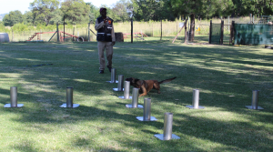Explosives Detection Training
