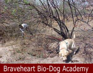 Tracker Dog / Anti-Poaching Dog K9 (Canine)