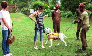 Substance Detection Dog K9 (Canine) - Braveheart Bio-Dog Academy